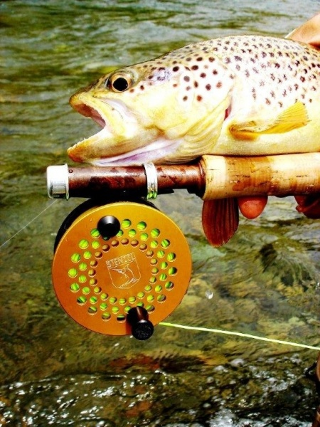 Fernando Hook & Gold Outfitters 's Fly-fishing Catch of a Brown trout – Fly dreamers