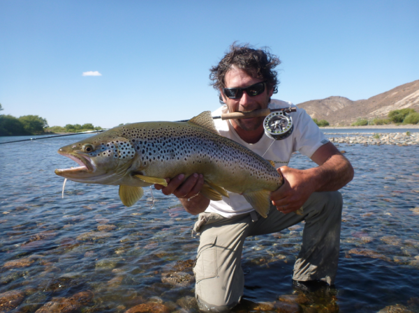 Fly-fishing Image of Brown trout shared by Jorge Trucco – Fly dreamers