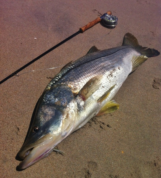 Fly-fishing Pic of Snook - Robalo shared by John Kelly – Fly dreamers