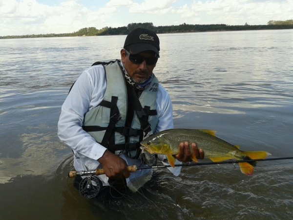 Fly-fishing Photo of Golden Dorado shared by <strong>Entre</strong> Plumas Y Anzuelos Concordia – Fly dreamers