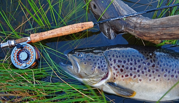 Brett Smith 's Fly-fishing Catch of a Brown trout – Fly dreamers