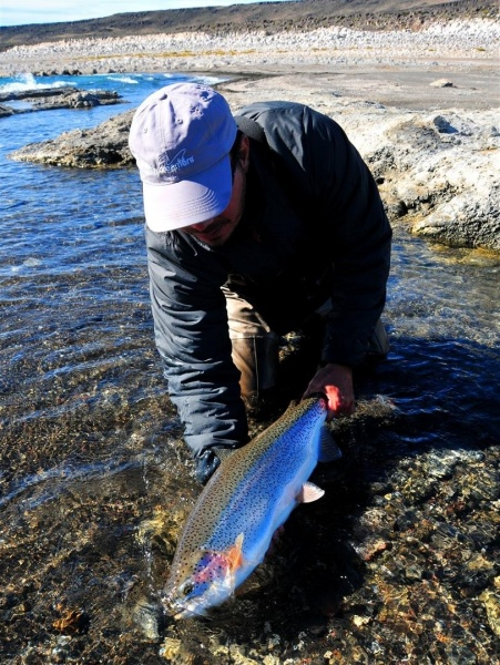 Nicolás Schwint 's Fly-fishing Pictureof a Rainbow trout– Fly dreamers