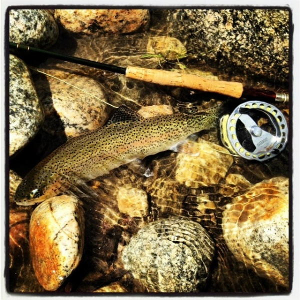 Jake Gertsch 's Fly-fishing Photo of a Rainbow trout – Fly dreamers