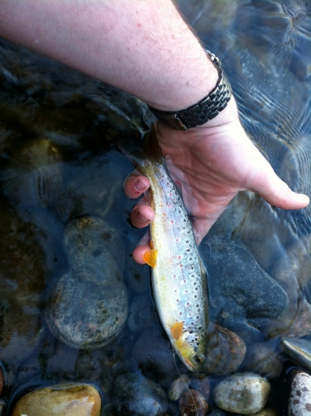 Fly-fishing Photo of Brown trout shared by Logan Standley – Fly dreamers