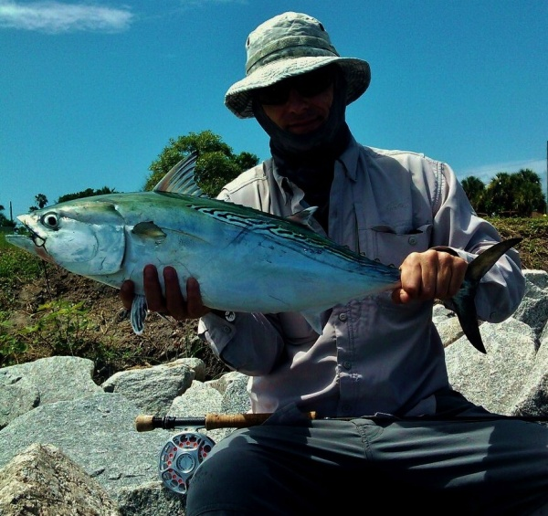 Fly-fishing Pic of False Albacore - Little Tunny shared by John Kelly – Fly dreamers