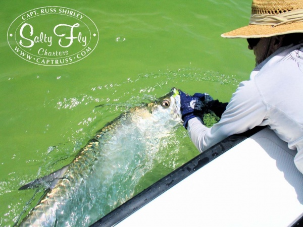 Fly-fishing Pic of Tarpon shared by Captain Russ Shirley – Fly dreamers