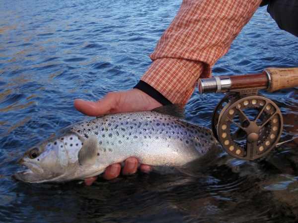 Fly-fishing Pic of Lake trout shared by Silvia Lopardo – Fly dreamers