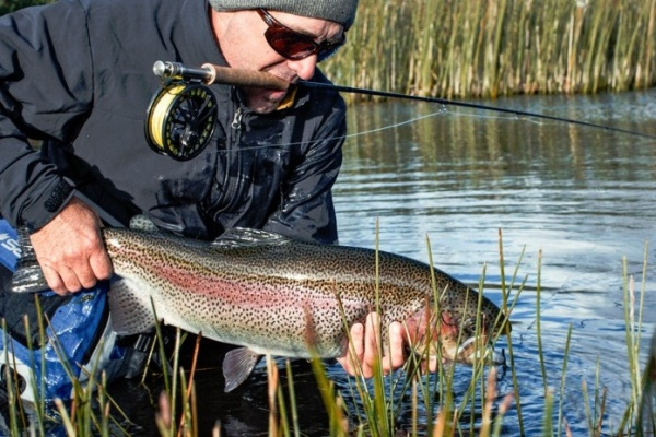 Salmo <strong>Patagonia</strong> Lodge 's Fly-fishing Picof a Rainbow trout– Fly dreamers