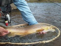 Fall Fly Fishing Montana