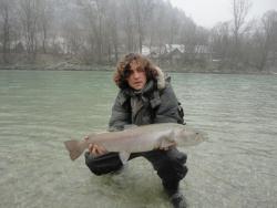 Danube salmon-hucho hucho in Slovenia