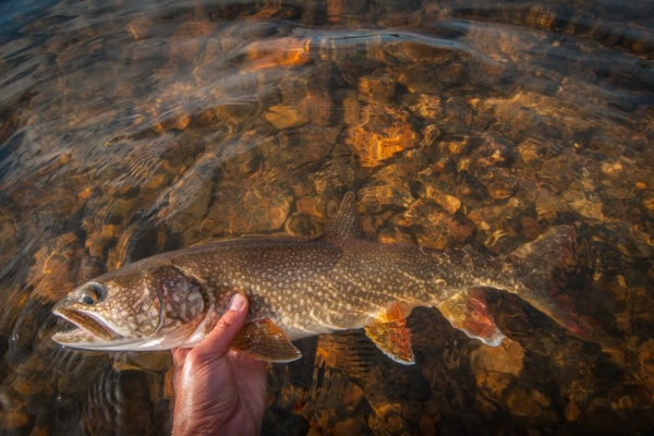 Alija Bos 's Fly-fishing Picof a Lake trout– Fly dreamers