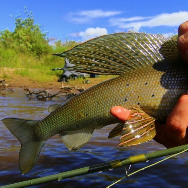 Fly-fishing Photo of Grayling shared by Mikey Wright – Fly dreamers