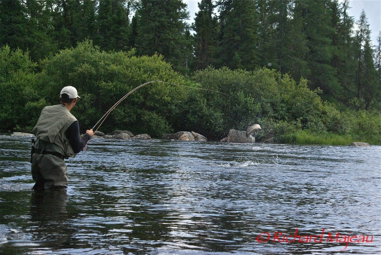 Richard majeau 39 s fly fishing photo of a landlocked for Mckenzie river fishing