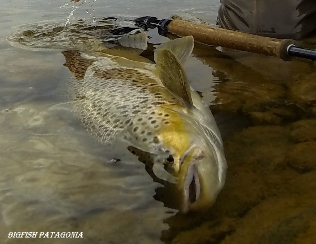 Rodrigo amadeo fly fishing guide casting instructor for Fly fishing casting