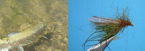 Impressive Fly-fishing Situation of Rainbow trout - Picture shared by <strong>Chip</strong> Drozenski – Fly dreamers