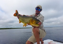 Fergus Kelley 's Fly-fishing Imageof a Golden <strong>Dorado</strong>– Fly dreamers