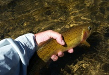 Chris Andersen 's Fly-fishing Pic of a Cutthroat – Fly dreamers