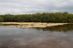BTT: Everglades Restoration- Please Act Now!
