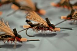 5 Top Dry Flies For Fly Fishing Patagonia, Chile