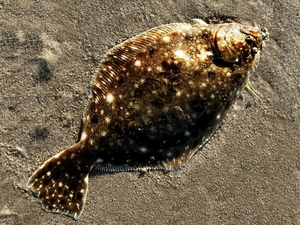 Northeast US Fish