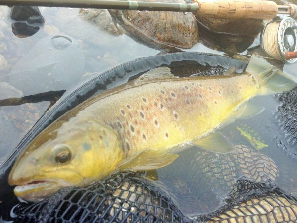 Fly fishing community fly dreamers for Fishing videos 2016