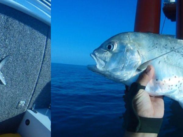 Darwin species saltwater