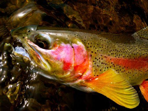 La organización norteamericana KeepEmWet ha seleccionado una serie de consejos a tener en cuenta a la hora de devolver nuestras capturas sanamente a su medio. Incorporando estos tips en nuestras salidas de pesca podemos comenzar a reducir el tiempo que e...