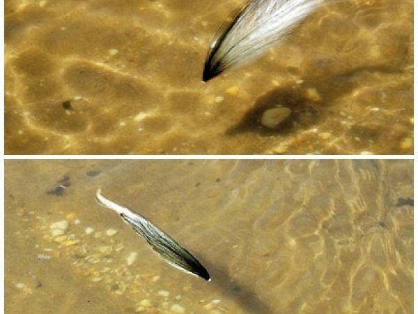 Inshore Flys