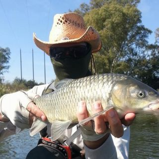 Small mouth Yellowfish from the Vaal