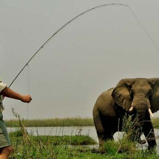 Fly fishing on the Zambezi river with an Elephant