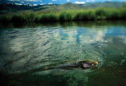 Salmon River, Sun Valley, Idaho, United States