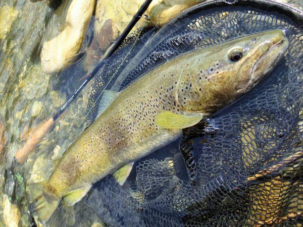 Fishing 2017