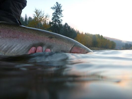 PNW SPEY GUIDES