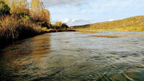 Postal del Otoño en el Río Diamante (San Rafael, Mza.)
