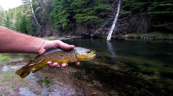 A few of these over the weekend at one of my favorite close by rivers.