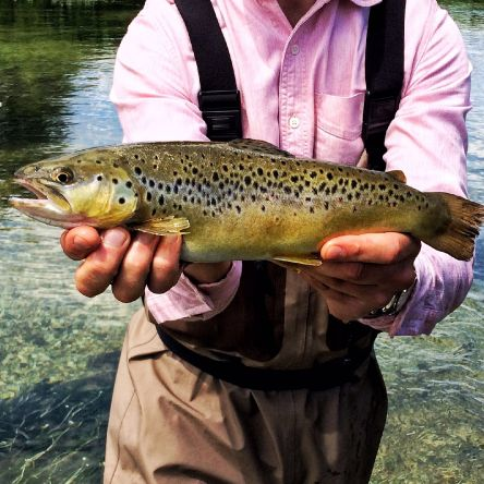 Dry flies an large trout. The perfect combination.