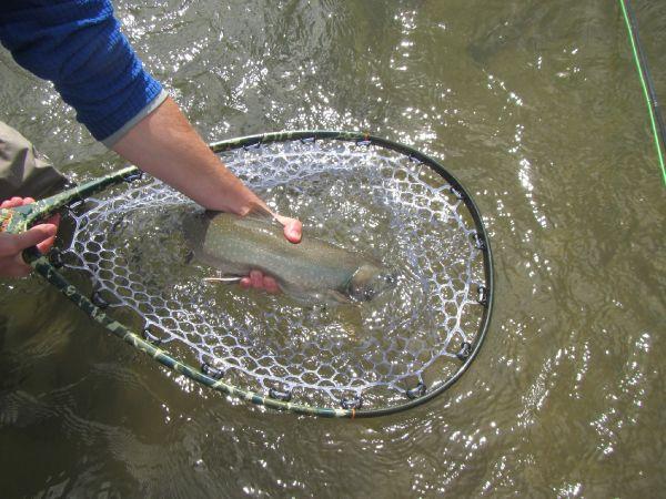 King Salmon Alaska