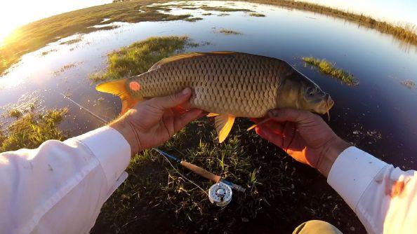 Pesca de carpa con equipo 4