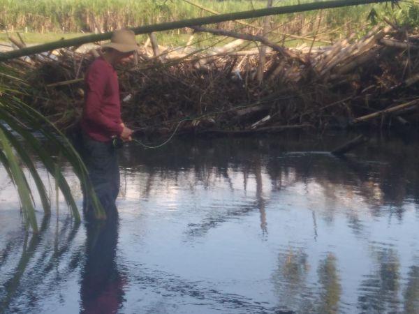 Pesca de Sabaleta en el río Guarne