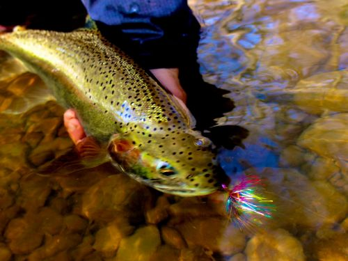 Fd: Can you tell us a bit about how the idea of setting up a fly-fishing operation came up? Well I'd been guiding in Alaska for a number of years, and when the season would end up there I'd come back home here and our fall fishery would always be just sta...