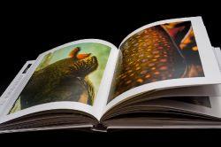 Wild Trout: A Book by Photographer Isaías Miciu and Biologist Javier Urbanski
