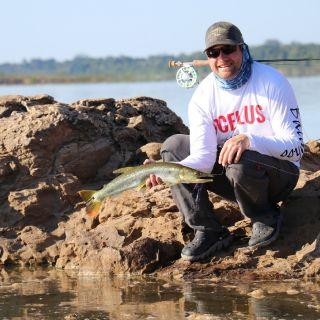 Bicuda - Tapajós River Amazon Brazil