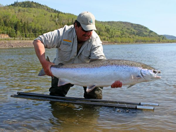 Restigouche Salmon