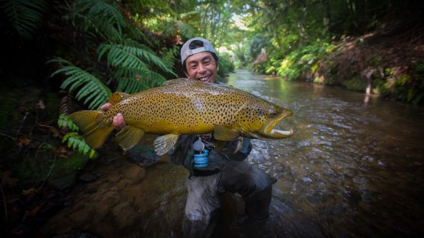 12lb Brown trout  North Island. New Zealand