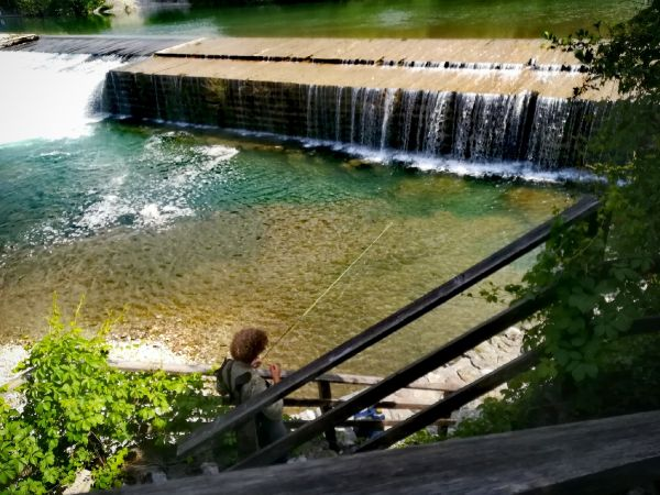 Flyfishing for trouts and danube salmon in Slovenia