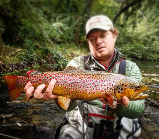 Puccini brown trout in Tuscany