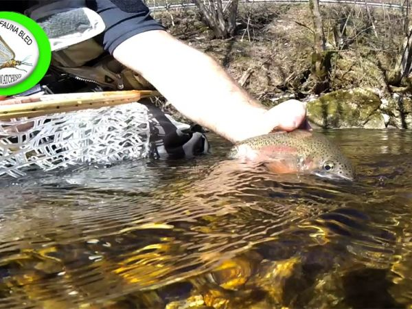 Spring Fly Fishing Slovenia