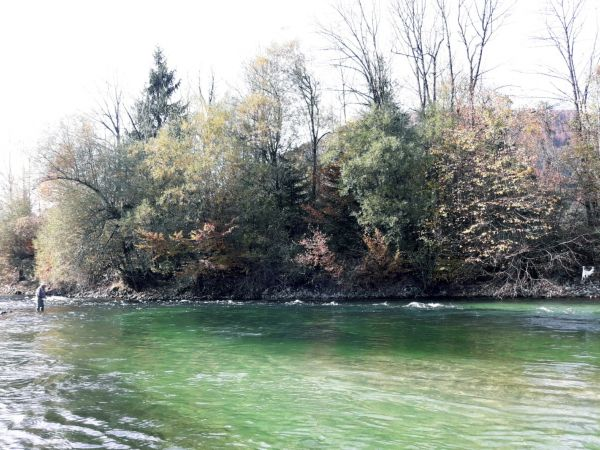 Autumn Fly Fishing in Slovenia
