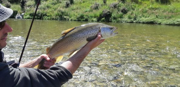 Back country Brown