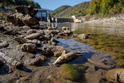 Endangered Fish Due To Hydropower Boom